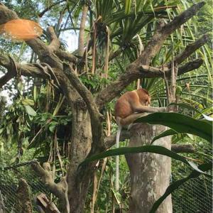 【シンガポール】シンガポール動物園 感想