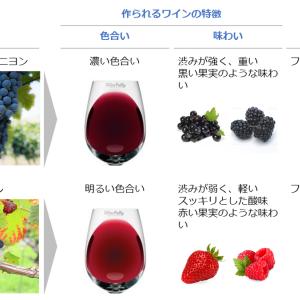 品種の特徴を知ろう!赤ワイン編①【まずは主要品種】