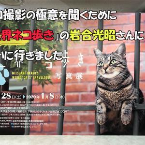 ネコ撮影の極意を聞くために「世界ネコ歩き」の岩合光昭さんに会いに行きました