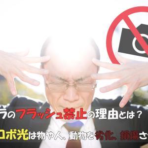 カメラのフラッシュ禁止の理由とは?ストロボ光は物や人、動物を劣化、損傷させる?