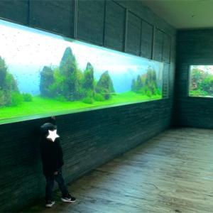 スカイツリータウンで水族館を満喫して世界に一つのオリジナルトミカを作成⭐︎