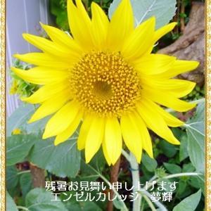 令和2年神奈川県の社会福祉問9