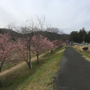 盆堀林道から今熊山