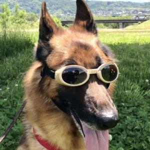 犬のごはんを圧力鍋で作っていつまでも一緒に健康長寿