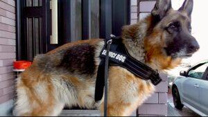 犬の散歩は首輪よりもハーネスがお薦め