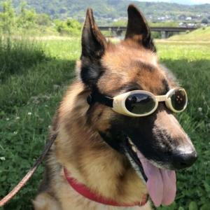犬を飼うと幸福度と健康が手に入る!つらい時は犬が心の支え