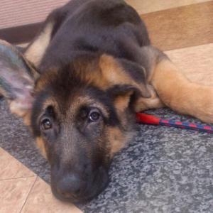 犬を飼いはじめたら写真と動画をたくさん撮っておく!