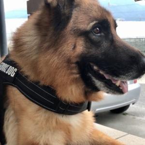 犬の留守番は危険がいっぱい!ケージの中で過ごさせるのが安全