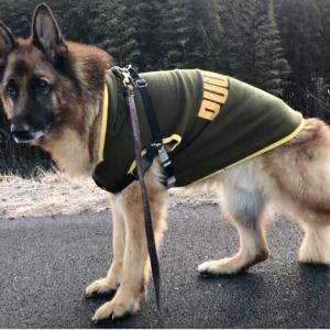 犬に服を着せるなら冬よりも夏のほうが絶対おすすめ