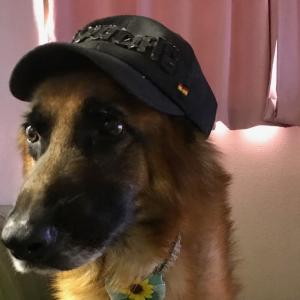 犬の肝臓を守るミルクシスル!薬を服用している犬にお薦めサプリメント