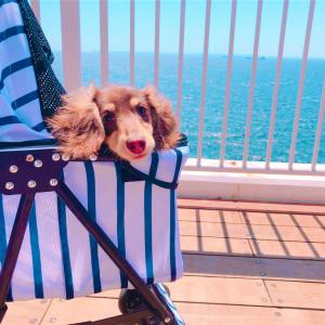 【犬と旅行】千葉にある愛犬と泊まれるリゾートホテル「&WAN(アンドワン)九十九里」に宿泊してみた!旅行プランの参考にも◎