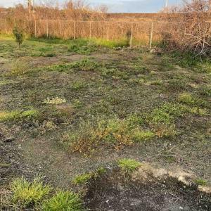 振り返り開墾前の畑の様子