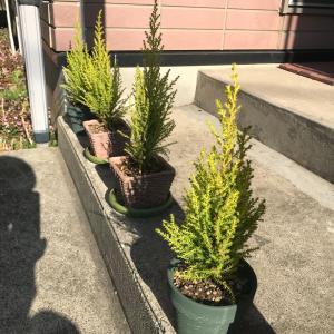 アパートに彩りを添えるおすすめ植物
