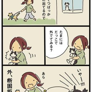 外に行きたい猫と行きたくない猫