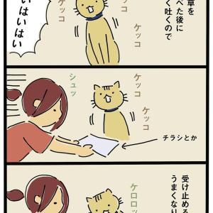 猫よく吐く