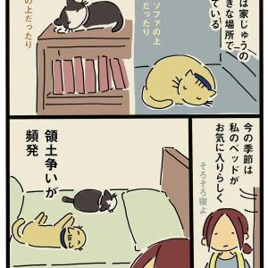 ベッドのとりあい