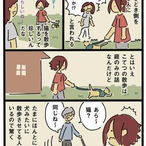 上をいく猫散歩