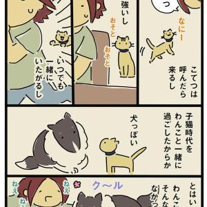 わんこから猫へも教育