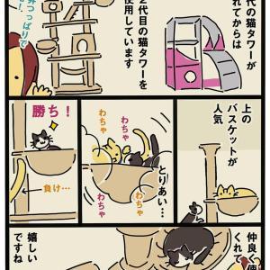猫タワー争い