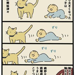 甥っ子と猫①