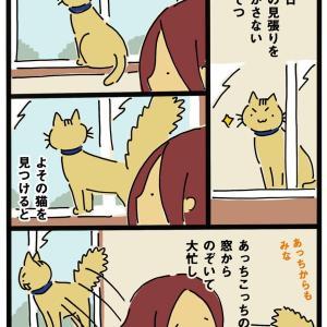 よその猫との闘い