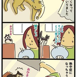 猫って暑いとこ好き