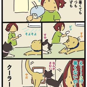 クーラーと猫(前)