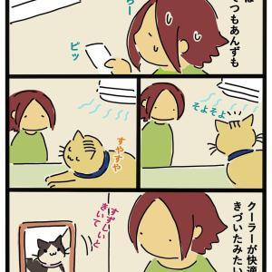 クーラーと猫(今)