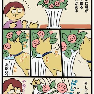 花より花瓶