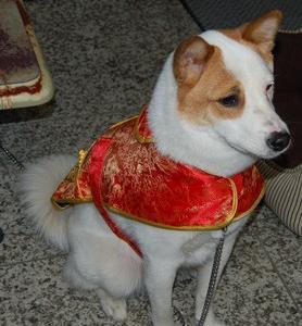 Chinese (^^)