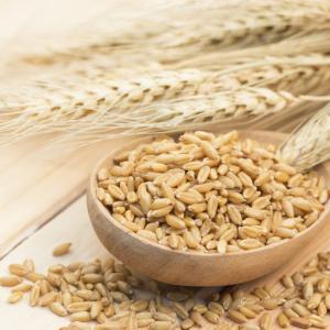 【ブログ】全粒穀物を食べることのメリット