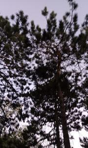 森林と樹木の恩恵