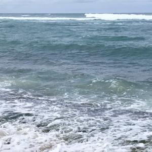 ハワイ外出禁止6日目 過去picから亀さん🐢