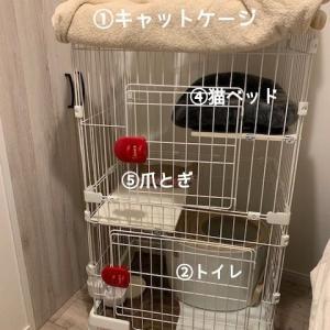 新猫を迎える準備@多頭飼いに必要なもの