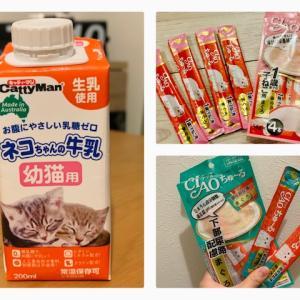 子ねこ用ミルクとちゅーるについて(保護猫トライアル開始時に用意していて役立ったもの)