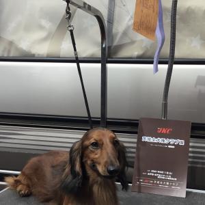 『茨城全犬種クラブ展』&『茨城ダックスフンドクラブ展』&『神奈川北ダックスフンドクラブ展』