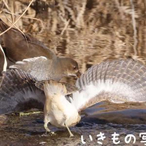タマちゃん怒るヽ(`Д´)ノプンプン