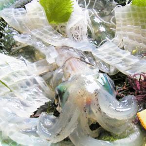呼子の剣先イカ活き造り!CAS凍結技術で旬も距離も関係なく全シーズン通販で食べられる!