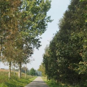 オランダ・ベルギードライブ周遊旅行 10 お気に入りの街になった、世界遺産ブルージュ 1
