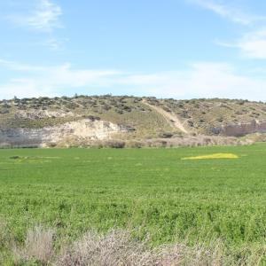 ダビデとゴリアテの戦ったエラの谷・遺跡発掘中のベトシェメシュ イスラエル旅行記 16