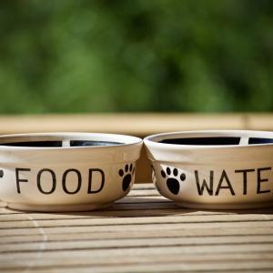 愛犬家が選ぶドッグフードのおすすめ! 市販のドッグフードで栄養も満点
