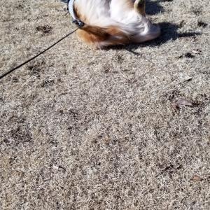 飛行犬になれたかなぁ