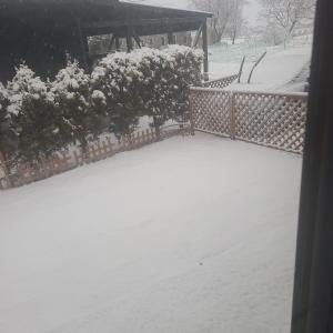 雪降ったね