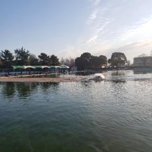 久々の川越水上公園トラウト!友釣りは楽しい!