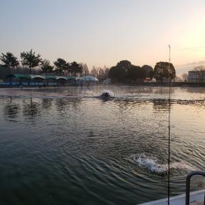釣果をアップするには?修行の川越水上公園釣行。