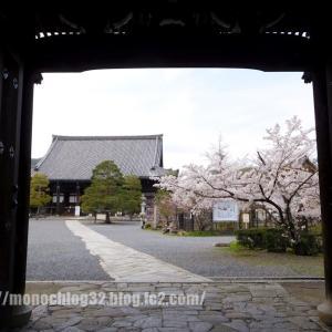 2020年春 清凉寺(境内の桜)