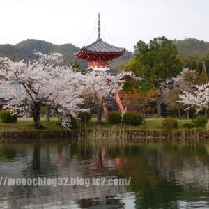 2020年春 大沢池①(桜)