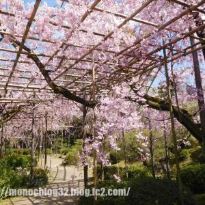 2020年春 平安神宮 神苑①(枝垂桜)