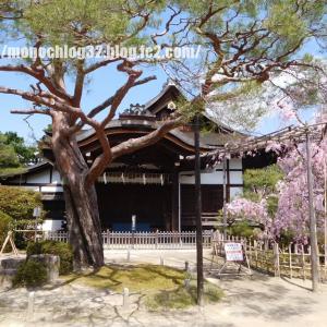 2020年春 平安神宮 神苑②(桜)