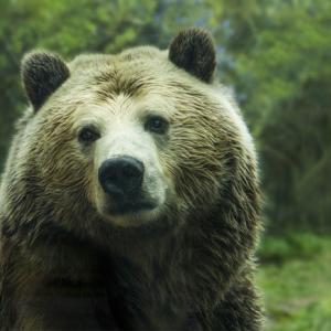 熊の対策・山の麓の書店員が本気で語ります